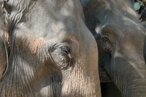 Elephant Festival @ Ban Kiet Ngong