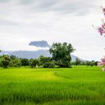 Extended Rural Mekong Tour